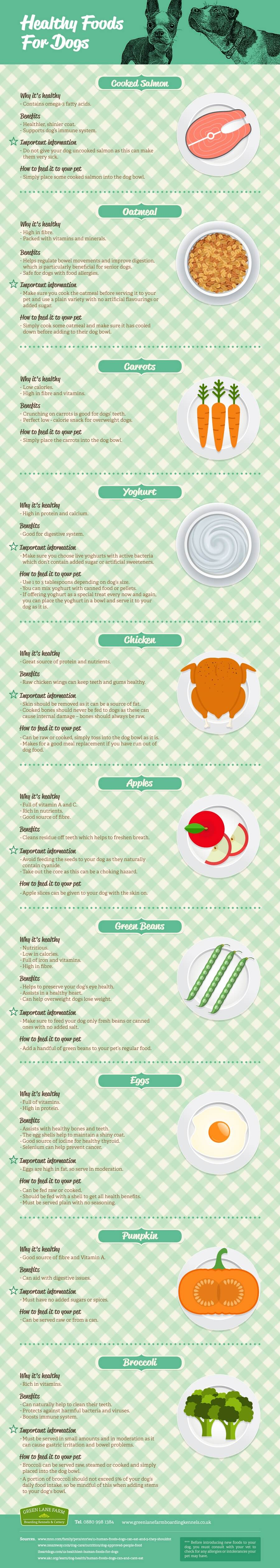 healthy foods for dogs infographic