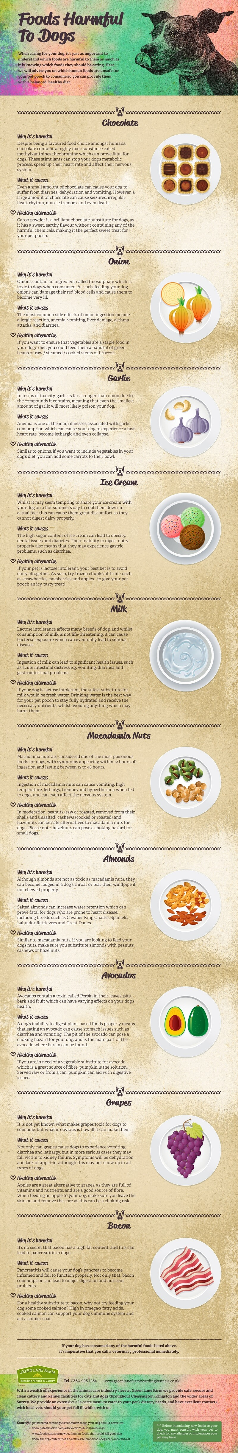 Toxic Foods For Dogs