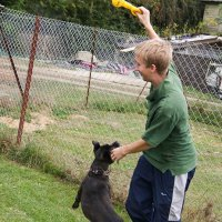 dog playing with kennel staff
