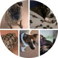 staff pet collage