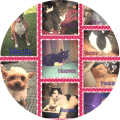collage of pets
