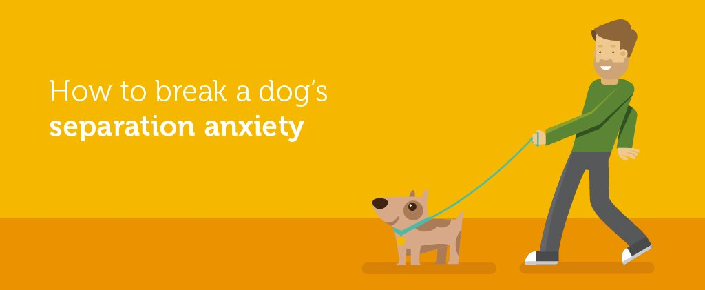 How To Break A Dog S Separation Anxiety Green Lane Farm Boarding Kennels