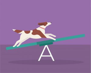 Agility Training for Dogs at Home