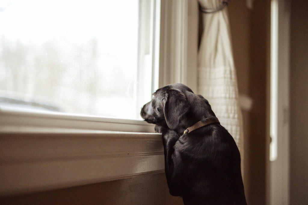 dog by window